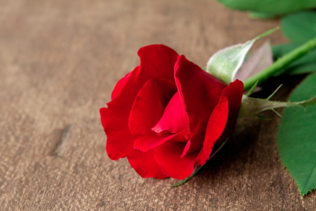 red rose on wood floor photo free download. Black Bedroom Furniture Sets. Home Design Ideas