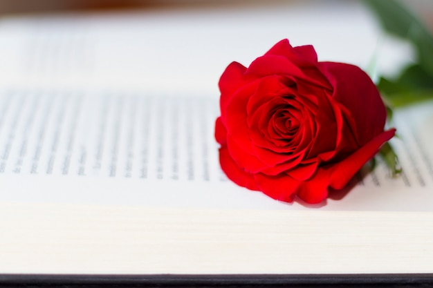 Red rose on the open book Premium Photo