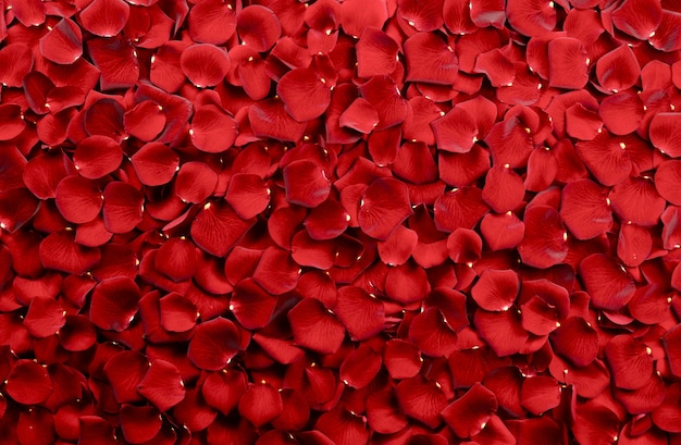 Red Rose Petals Background Photo
