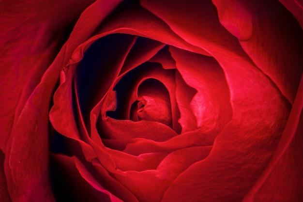 赤いバラの花びらのマクロ撮影 無料写真