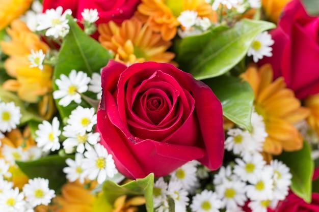 Red rose for valentine Premium Photo