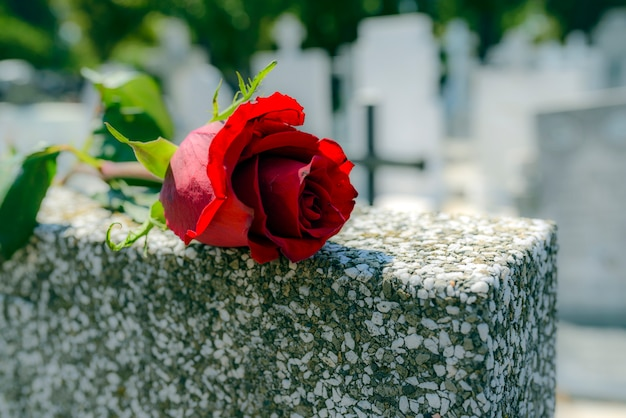 Red rose was left on gravestone in the graveyard for someone who passed away. Premium Photo