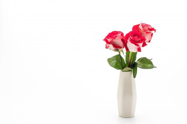 Red rose on white Premium Photo
