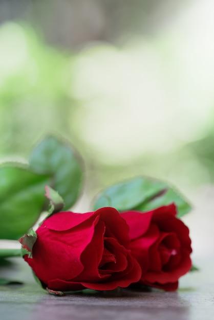 Red rose Premium Photo