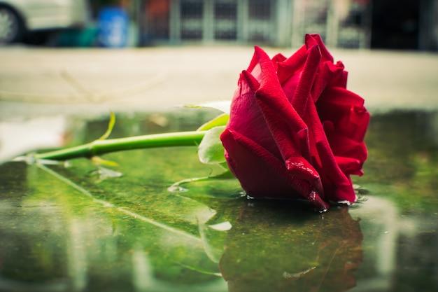 Red roses background vintage Premium Photo
