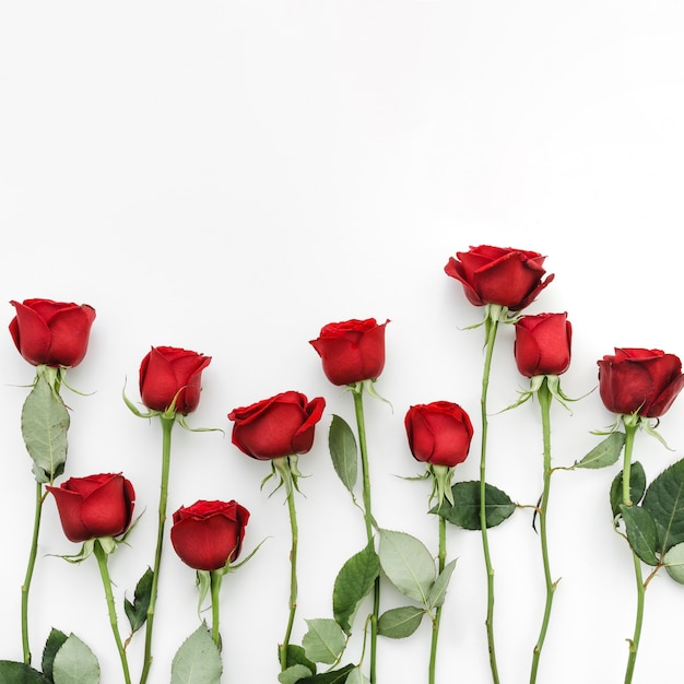 Red roses flowers Free Photo