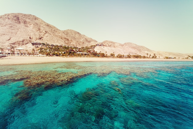 Red sea with coral reefs Premium Photo