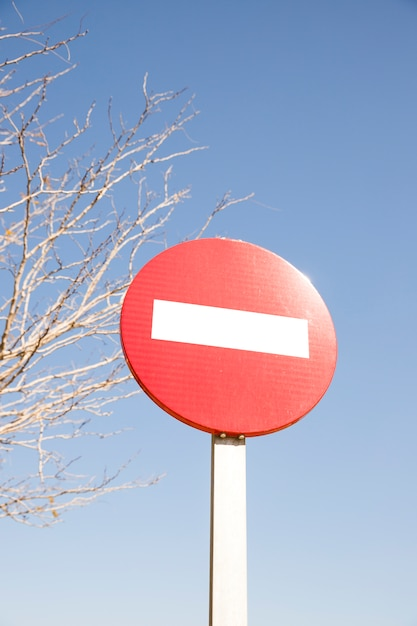 Red stop street sign in front of bare tree and blue sky Free Photo
