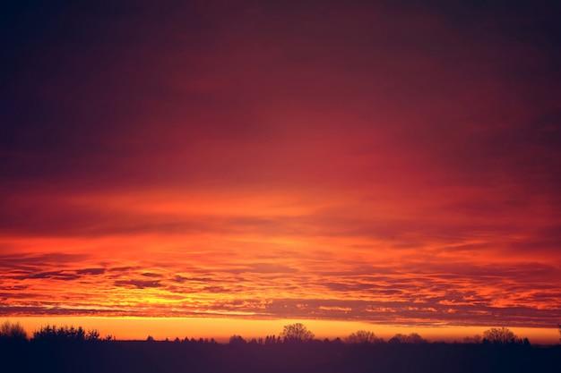 나무 위에 붉은 일몰 구름. 무료 사진