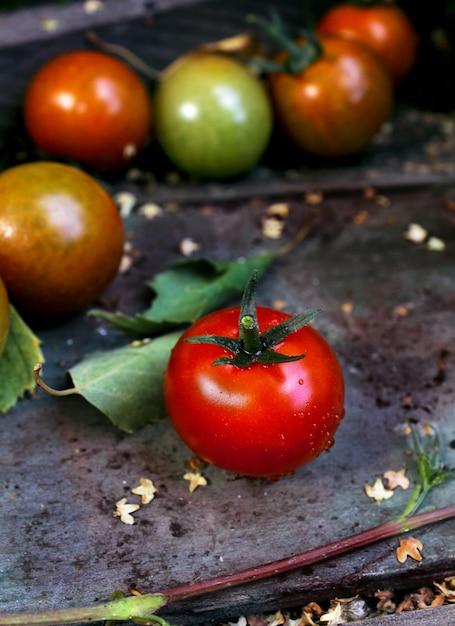 Red tomatoes garden Premium Photo