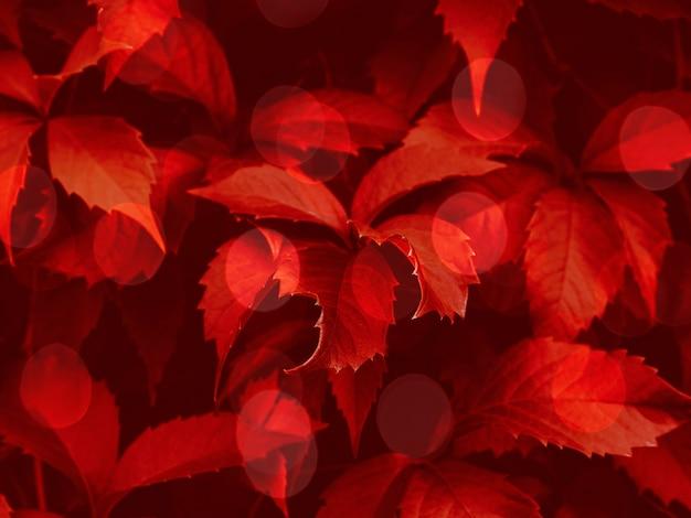 Red toned bokeh foliage trendy background Premium Photo