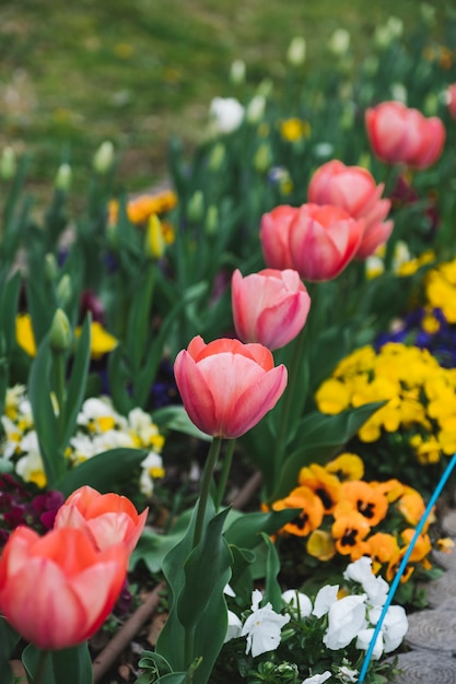Red tulip Free Photo