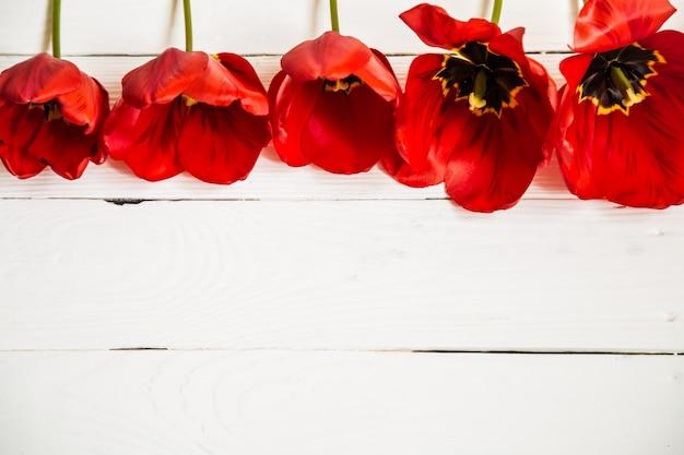 行、クローズアップ、概念の春の花の白い木製の背景に赤いチューリップ 無料写真