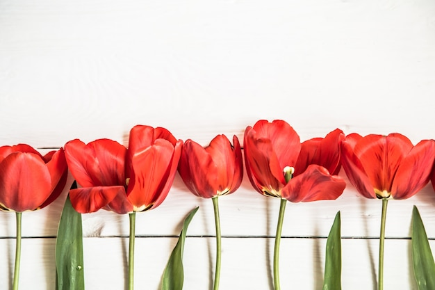Red tulips on white wooden background, in a row ,closeup,concept spring flowers Free Photo