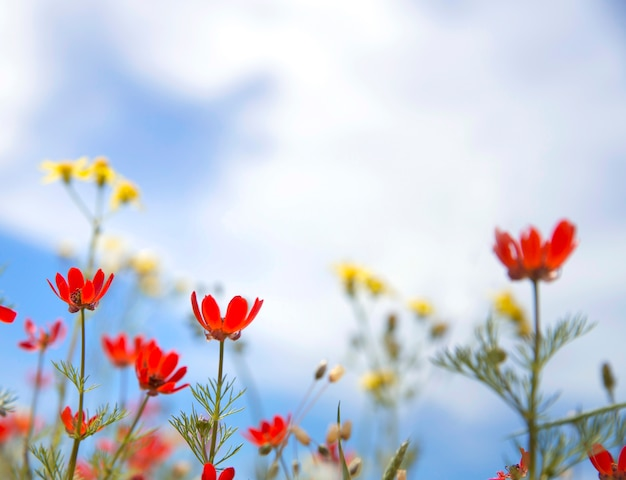 Red wildflowers Free Photo