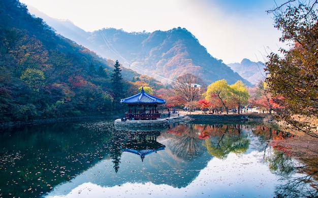 Reflection of autumn season at naejangsan national park, south korea. Premium Photo