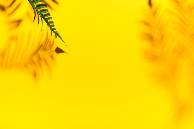 Reflection from palm branches Free Photo