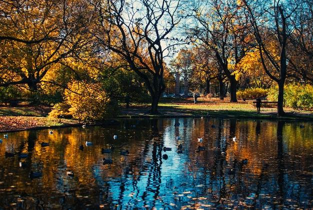 Отражение красивых деревьев и голубого неба в озере Бесплатные Фотографии