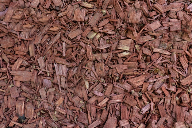 Relief texture of the brown bark of a tree close up Free Photo