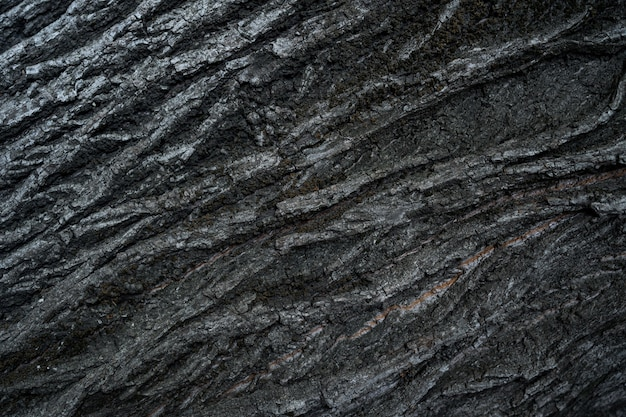 Relief texture of the dark bark of a tree close up Free Photo