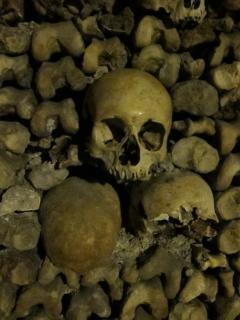 カタコンベの骨が残っている 無料写真