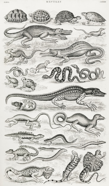 Reptiles from A history of the earth  Free Photo