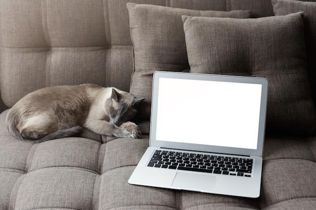 自宅で休憩し、インターネットの概念をサーフィンします。眠っているタイの猫の近くの居心地の良い灰色のソファに空白のコピー画面を備えた現代のラップトップコンピューター。 無料写真