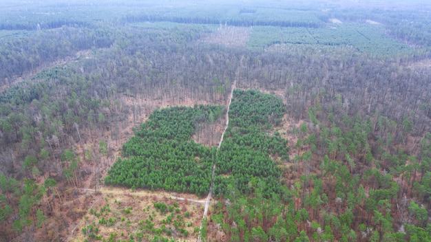 完全伐採後の斜面の森の復元。ドローンビュー。 Premium写真