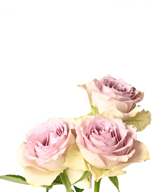 shabby chic easter decor on sale.htm retro roses shabby chic isolated on white background premium photo  retro roses shabby chic isolated on