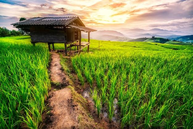 치앙마이 논 프리미엄 사진