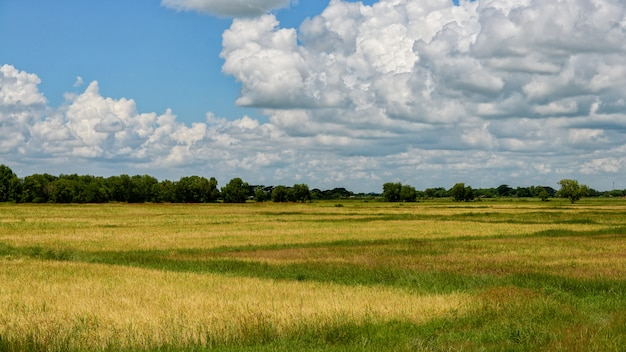 Rice field ofbago myanmar landscpae Premium Photo