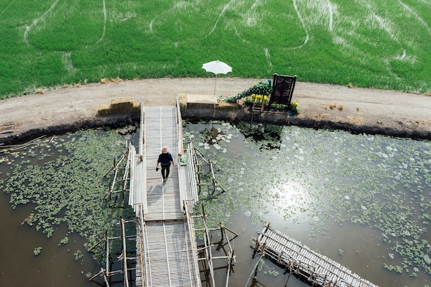 Rice field and people on bridge walking in thailand Free Photo
