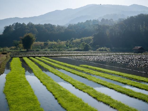 山を背景に田んぼ Premium写真