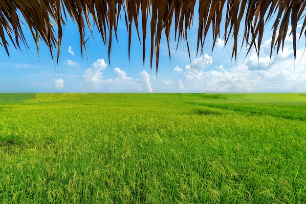 Rice fields and huts, viewed from the inside Premium Photo