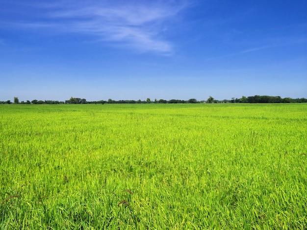 The rice fields on philippines Premium Photo