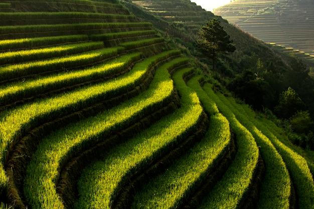 Rice fields, steps in the mountains mu cang cai,yenbai,vietnam. Premium Photo