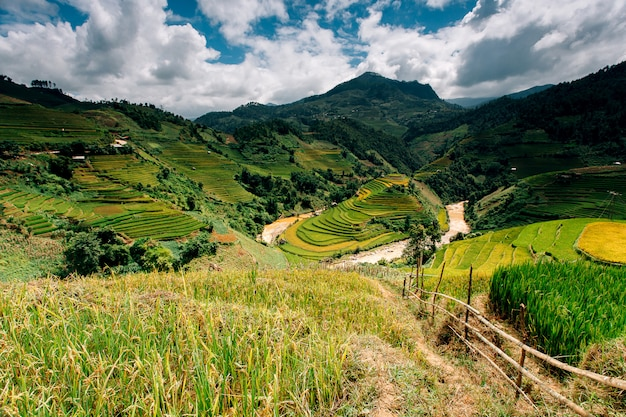 Rice fields on terrace in rainy season at mu cang chai, yen bai Premium Photo