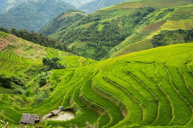 Rice fields on terraced of mu cang chai vietnam Premium Photo