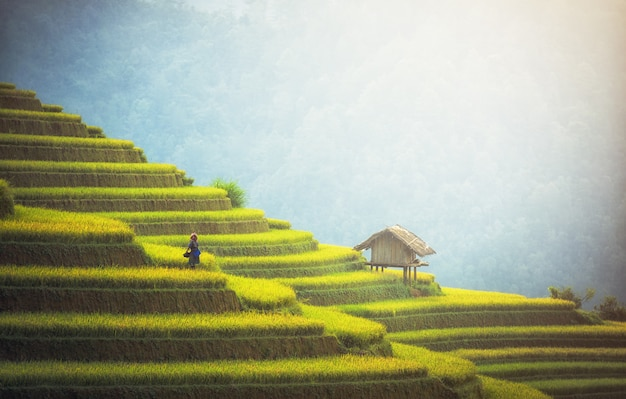 Rice fields on terraced of mu cang chai, yenbai, vietnam. vietnam landscapes. Premium Photo