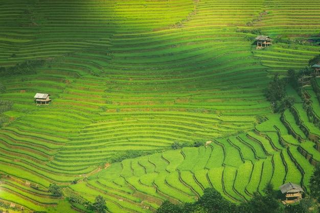 Rice fields on terraced of mu cang chai yenbai vietnam Premium Photo