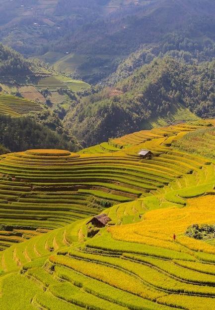 Rice fields on terraced of mu cang chai Premium Photo