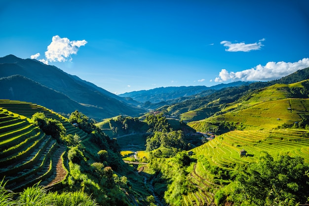 Rice fields on terraced with wooden pavilion on blue sky background in mu cang chai, yenbai, vietnam. Premium Photo
