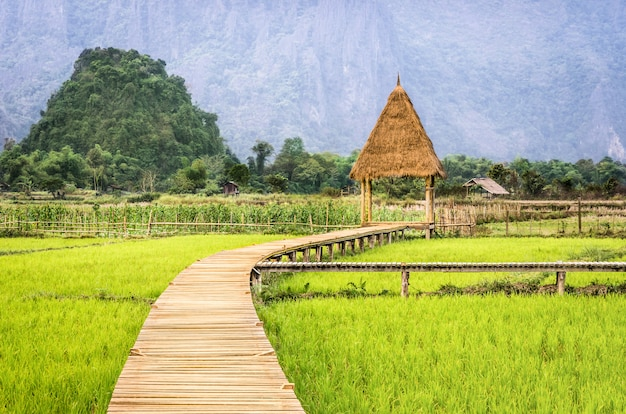 Rice paddy field in vang vieng - laos pdr - walkway to the hut Premium Photo
