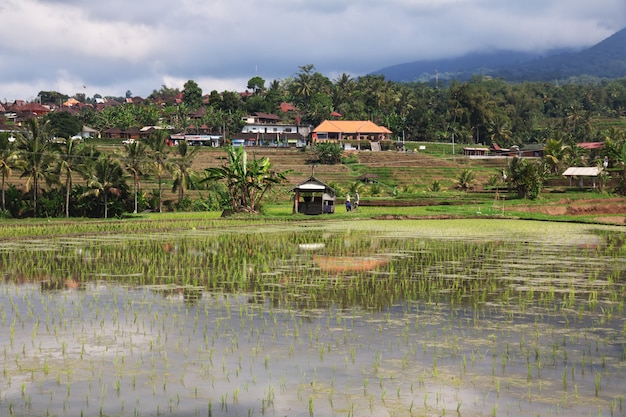 The rice terraces on bali, indonesia Premium Photo