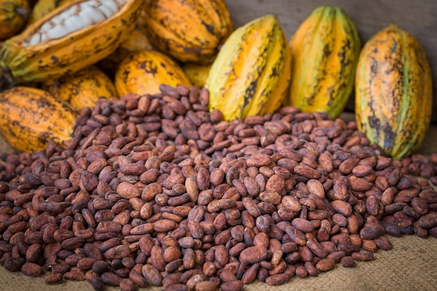 Ripe cocoa pod and beans setup on rustic wooden background Premium Photo