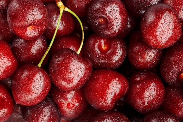 Ripe and fresh berries of a sweet cherry with water drops closeup. Premium Photo