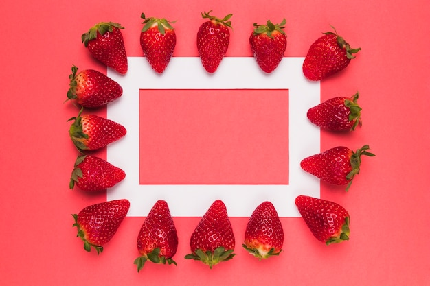 Ripe juicy strawberries lined up on white frame on pink background Free Photo