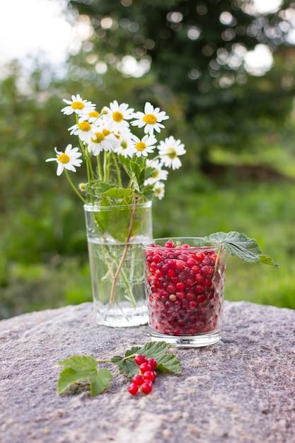 緑の葉と庭の屋外の石の上のガラスのコップで熟した赤いスグリの果実 Premium写真