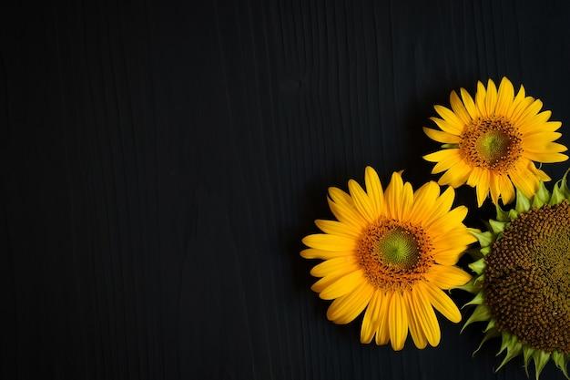 어두운 배경에 씨앗과 노란 해바라기 꽃과 잘 익은 해바라기 프리미엄 사진