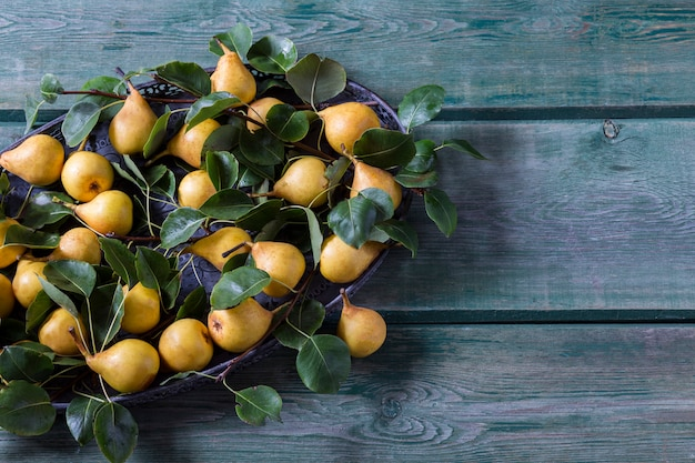 Ripe yellow pears in an old vase and pear branches Premium Photo